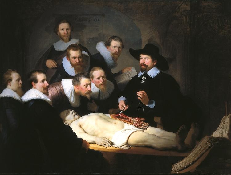 Anatomie Cursus